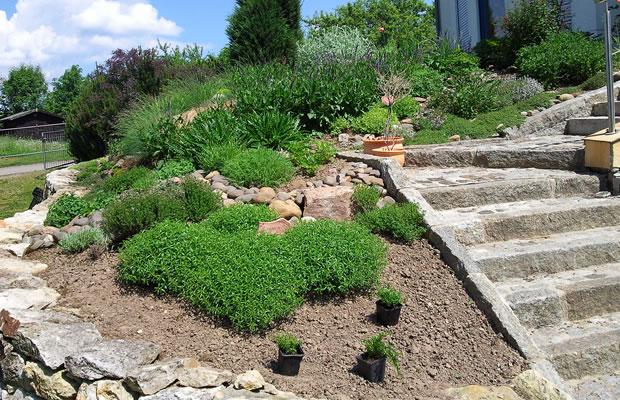 gartengestaltung in dresden und sachsen pflanzenreich